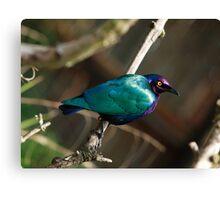 Purple Glossy Starling Canvas Print