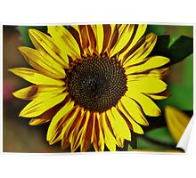 Wildflower color Poster