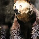 BEAR by Debbie Ashe