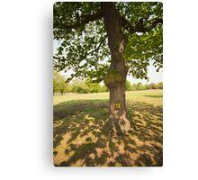 Tree Light & Shade Canvas Print