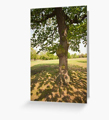 Tree Light & Shade Greeting Card