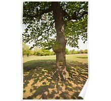 Tree Light & Shade Poster