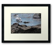 Seagull Rock Framed Print