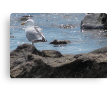 Seagull Rock Canvas Print