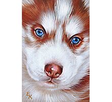 Husky pup Photographic Print