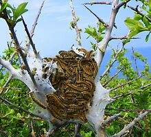 Cornwall: A collection of Caterpillars by Rob Parsons