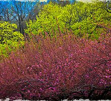 The Colors of Spring by Chris Lord