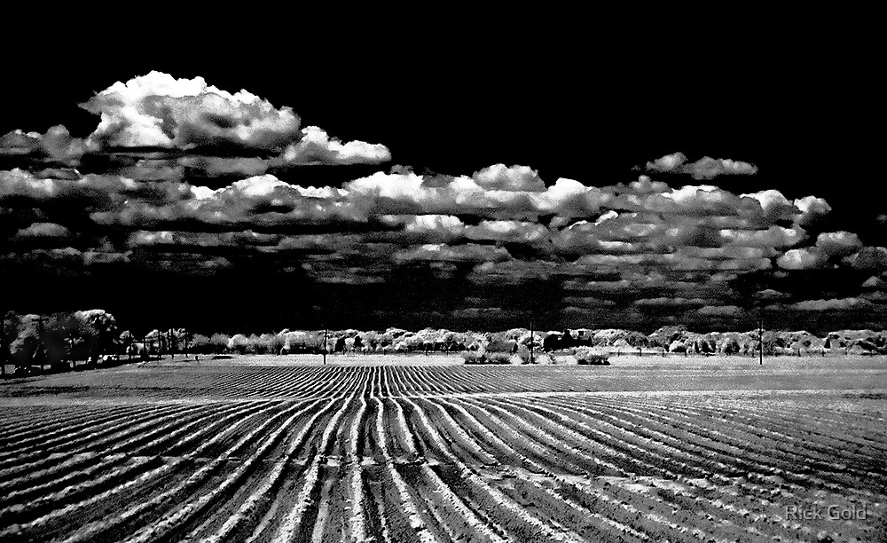 Bridgehampton Potato Field with Clouds by Rick Gold