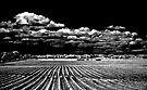 Groovy Bridgehampton Potato Field with Clouds by Rick Gold
