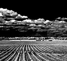 Bridgehampton Potato Field with Clouds by Rick Gold