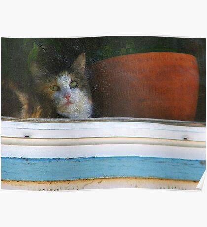 Kitten in the Window Poster