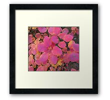 Colorful autumn leaves background Framed Print