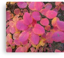 Colorful autumn leaves background Canvas Print