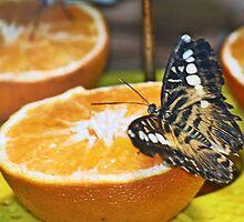 Vegas Butterfly by Mike Pesseackey (crimsontideguy)