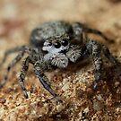 wooly spider by katpartridge