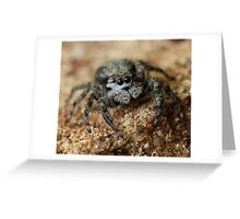 wooly spider Greeting Card