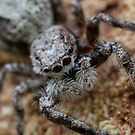 call me….mr. spider by katpartridge