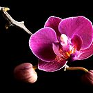 Purple Orchid by Simon Marsden