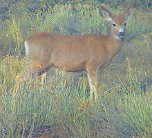 Deer by Lenore Senior