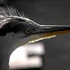 Heron by Andreas  Berheide