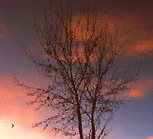 Evening Reflections by Karen  Rubeiz