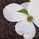 One Dogwood Blossom by Jane Jenkins