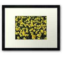 A Host of Golden Daffodils Framed Print
