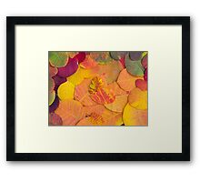 Colorful bright autumn leaves background Framed Print