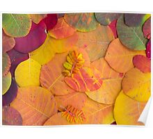 Colorful bright autumn leaves background Poster