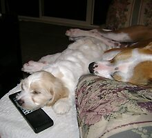 watching sport all night can be soo tiring  by chrissy mitchell