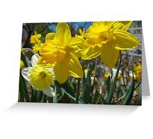 Golden Daffodils Greeting Card