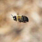 buzzin me by katpartridge