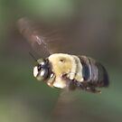 pet bee by katpartridge