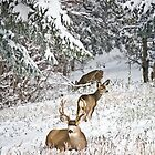 Buck with Lady Friends by Mike Hendren