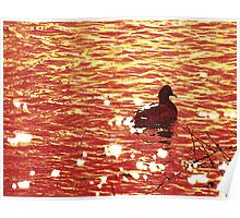 Wyoming-Duck on the River Poster