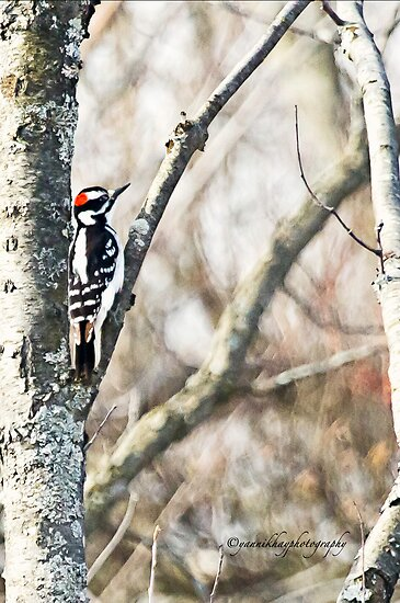 Hairy Woodpecker by Yannik Hay