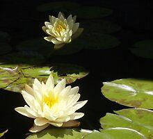 Lily II - Denver Botanic Gardens by Marijane  Moyer