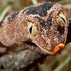 Katherine Spiney Tail Gecko by Chris Semmens