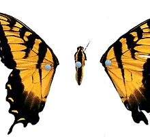 Brand New Eyes by username001