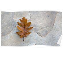 Oak single autumn leaf on the stone Poster