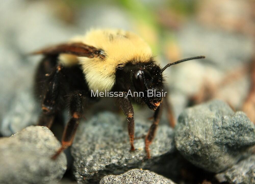 Tiny Rock Climber by Melissa Ann Blair