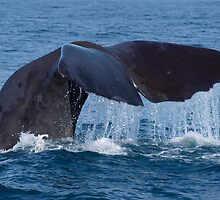 Whale Tail by Rebelle