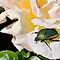 June Beetle by Michael  Moss