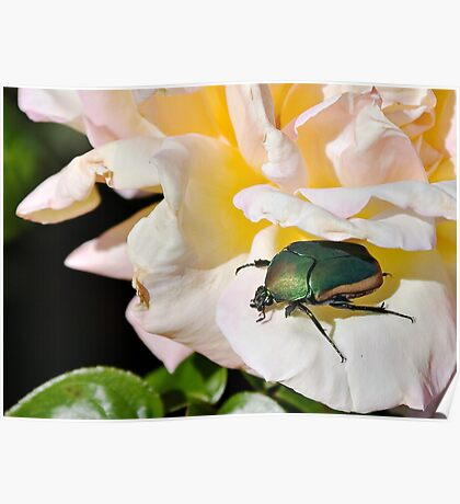 June Beetle Poster