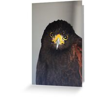 Juvenile Harris Hawk Greeting Card