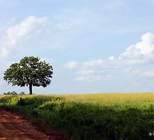 Lone Oak - Solitary tree in an open field by Betty Northcutt