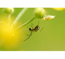 spider and his small world Photographic Print