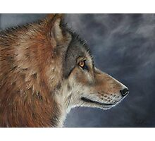 Lone Wolf Photographic Print