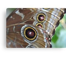 Blue Morpho at the Science Center Canvas Print