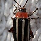 striped bug by katpartridge